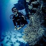 SSI Mares Diving Diver