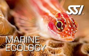 SSI Marine Ecology Biology Course